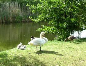 my favorite season swans at the lake
