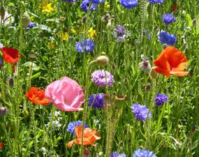 summer clip art flowers in bloom
