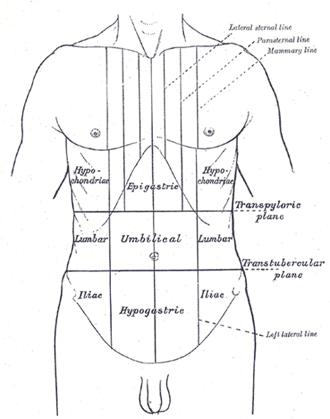 surface lines front thorax