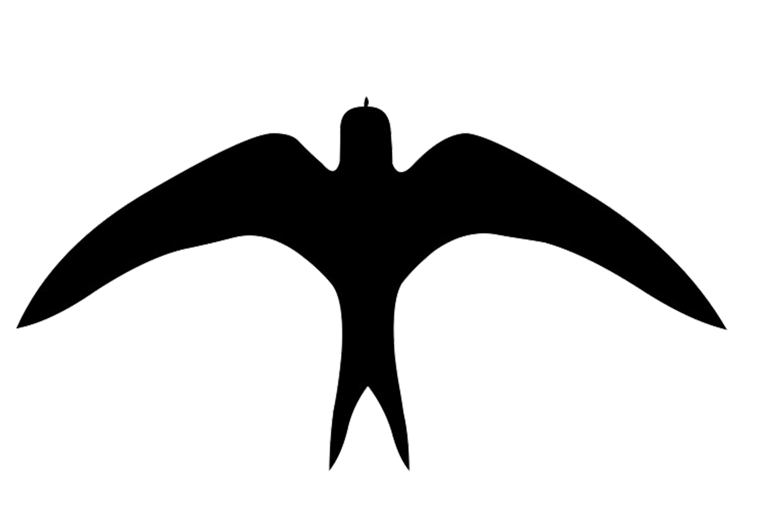 silhouette of swallow