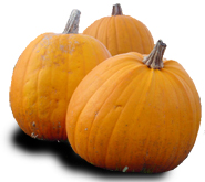thankgivings harvest pumpkins clipart