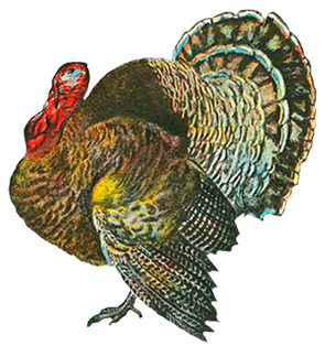 Turkey clip art old vintage