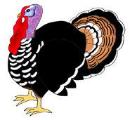 turkey pictures color thanksgiving