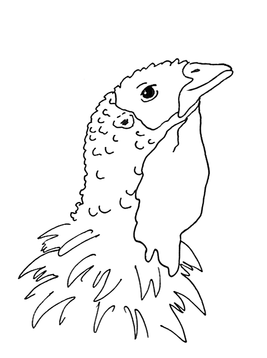 Thanksgiving coloring pages turkey bird head