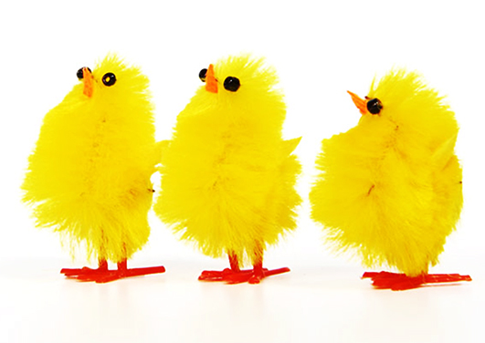 three yellow Easter chickens