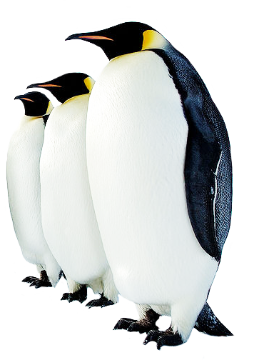 Penguin Clipart on King And Queen Clip Art