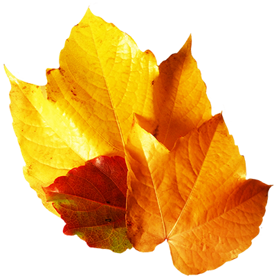 three fall wine leaves