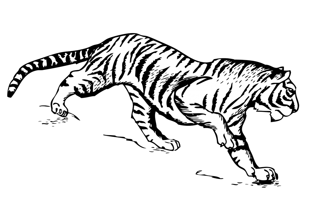 tiger illustration PNG