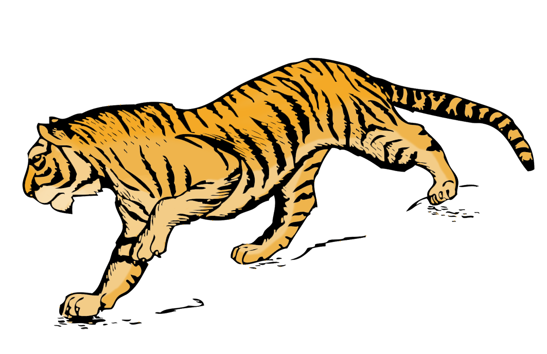 tiger clipart illustration in color