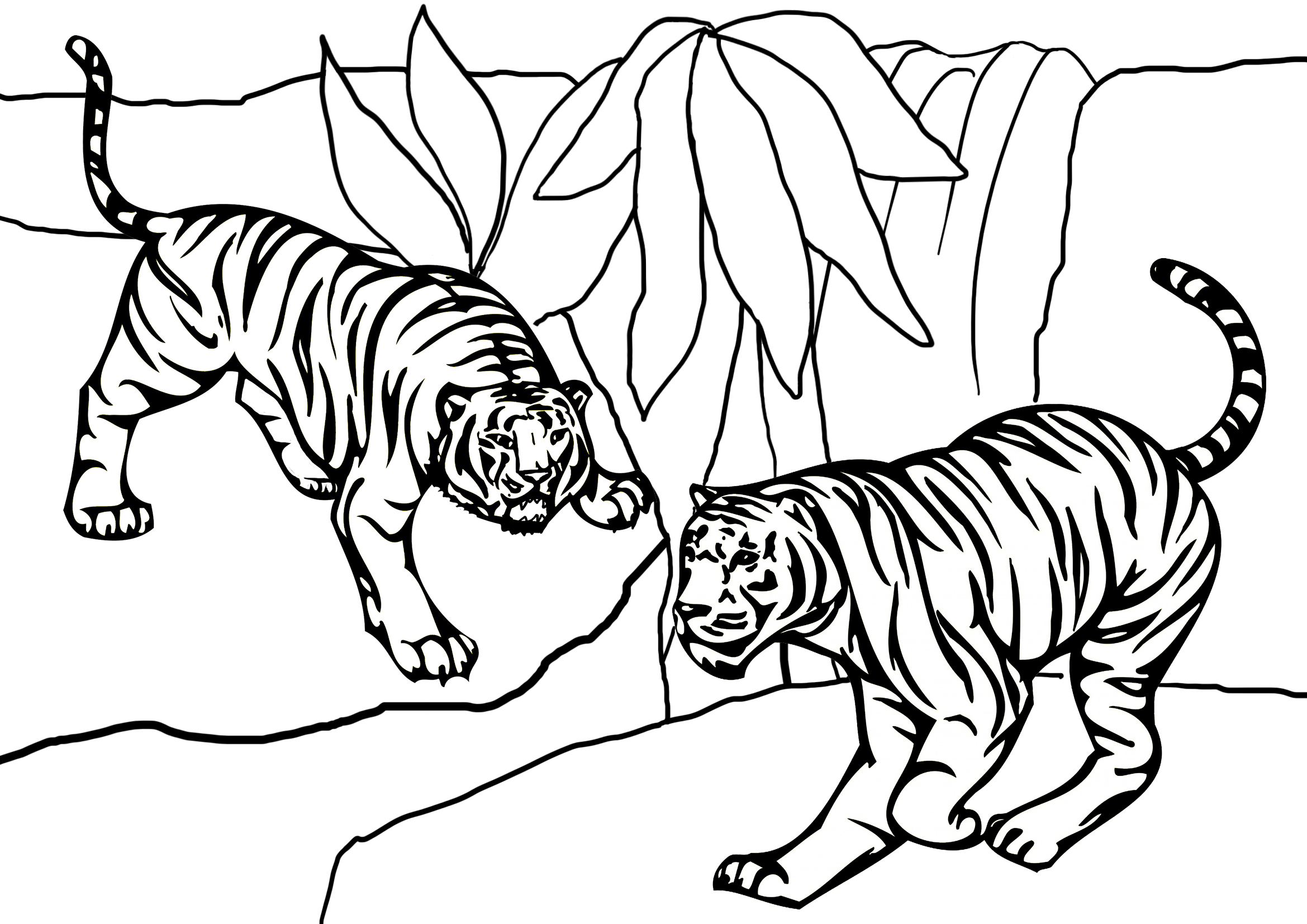 tiger coloring page two tigers
