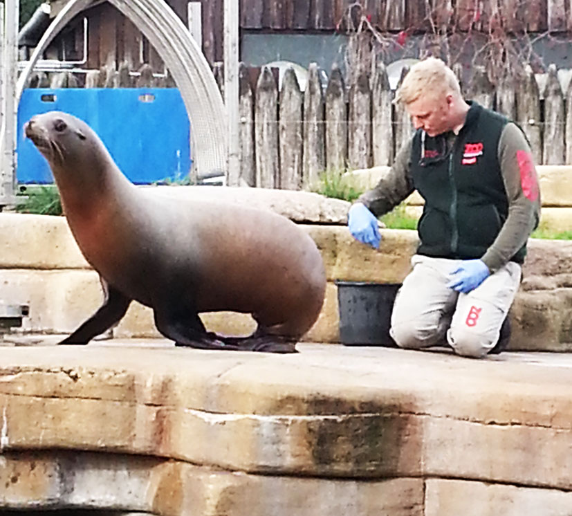 training-sea-lion