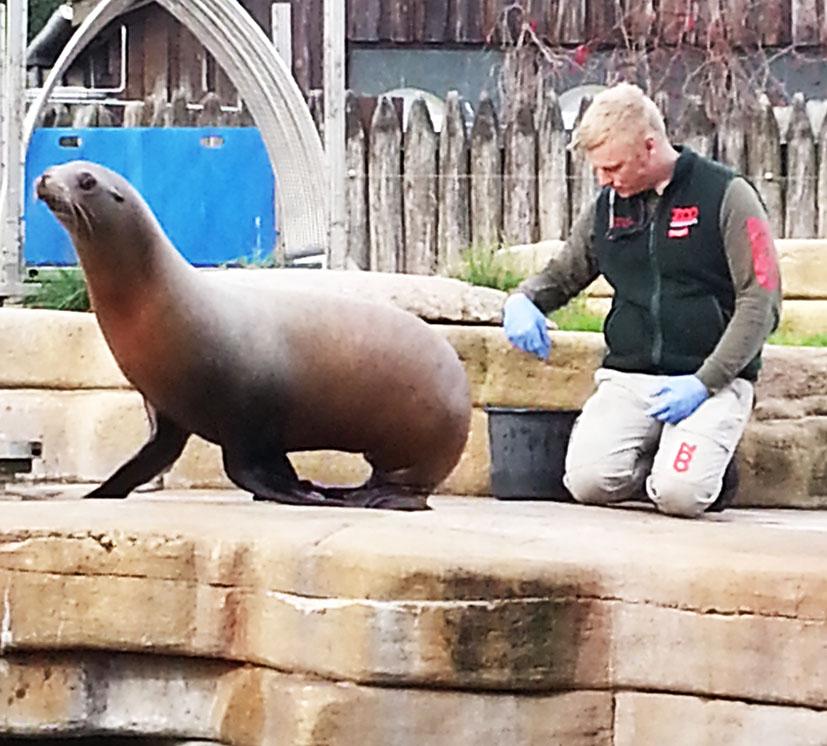 training-sea-lion