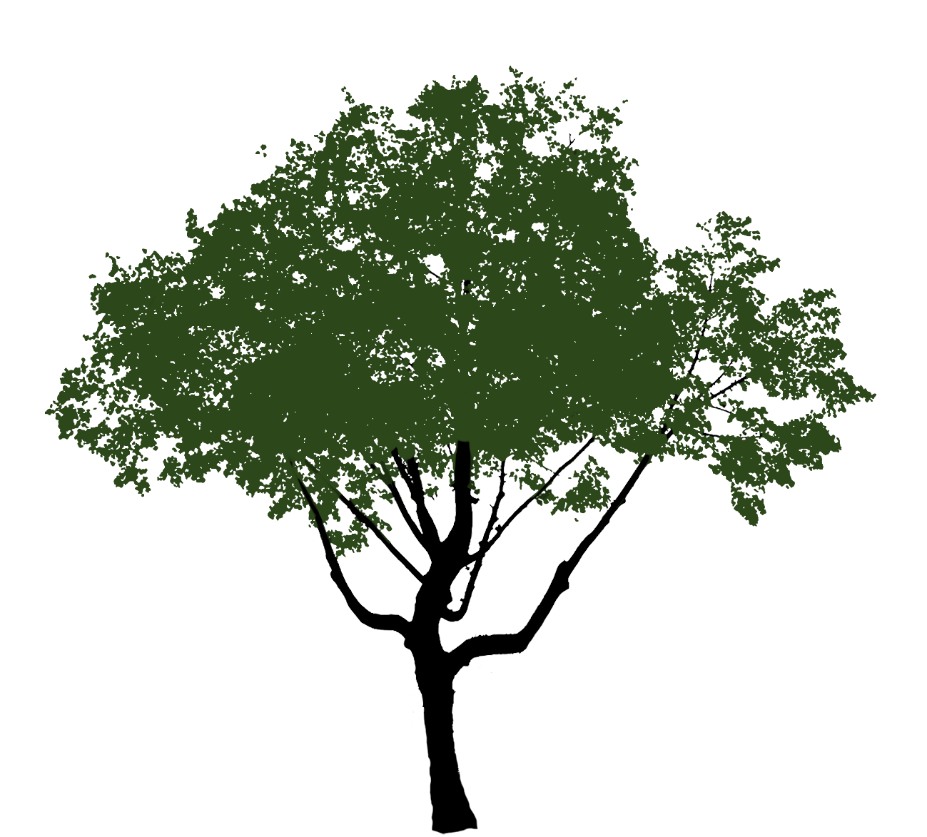 tree clipart green crown
