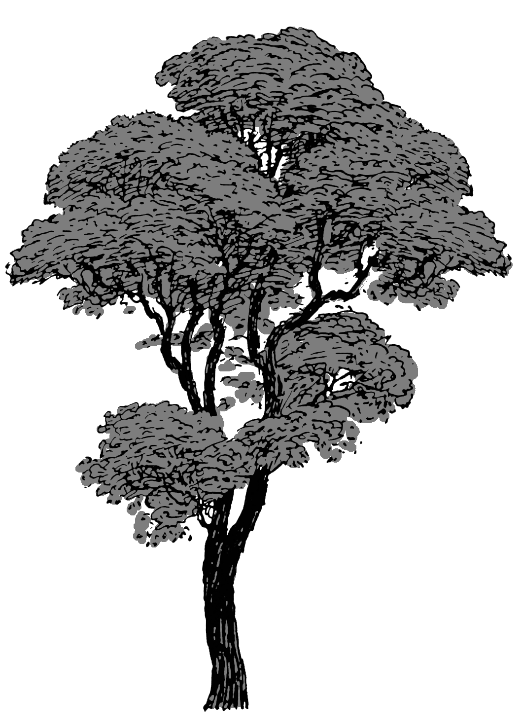 tree drawing grey black