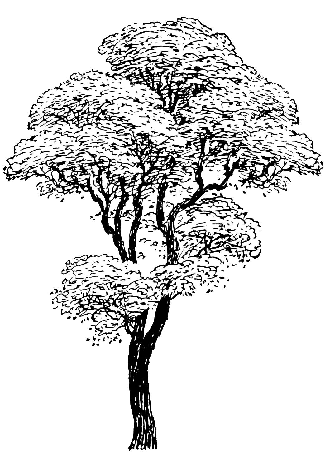 tree drawing black white