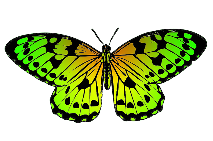 tropical butterfly image