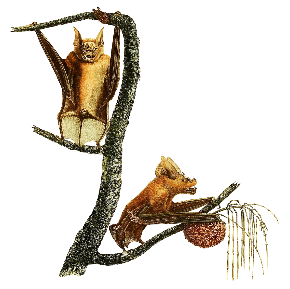 two fruit bats in a tree