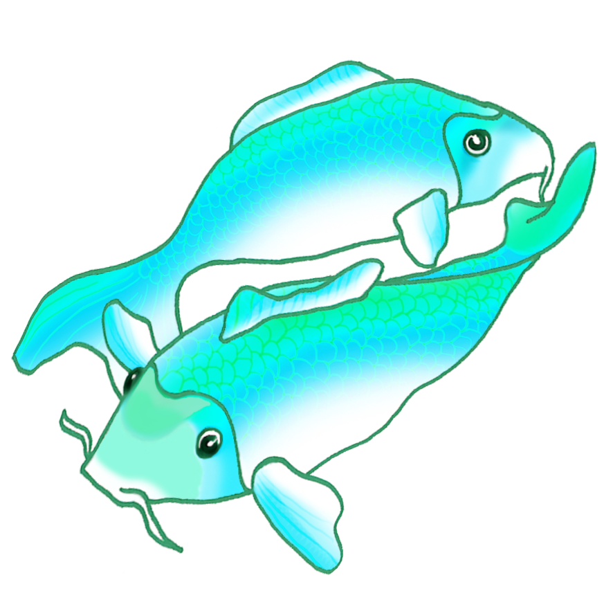 two blue green koi fish