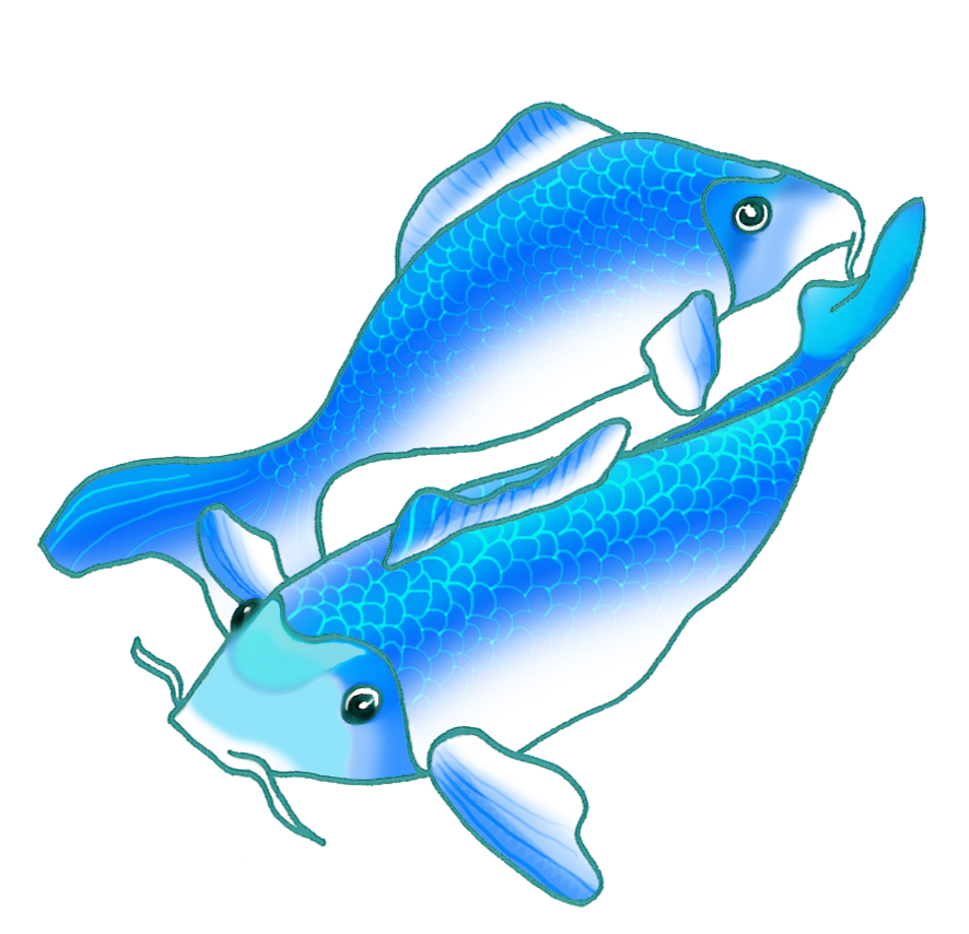 two blue koi fish swimming