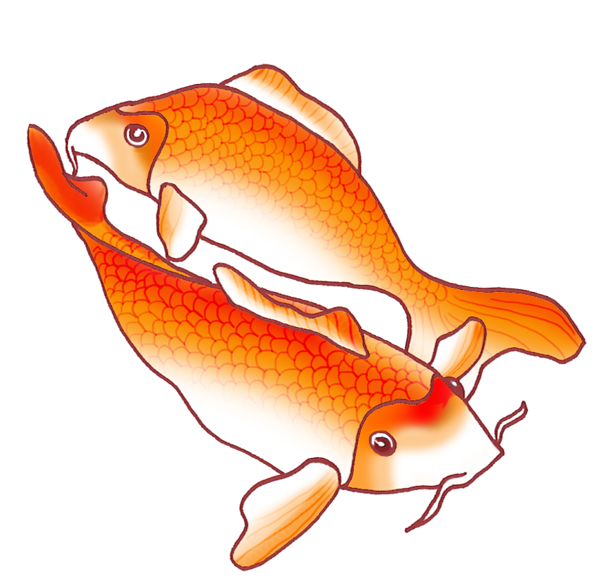 two orange koi fish drawing