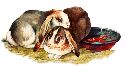 two rabbits in hay