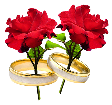 two red roses and wedding rings