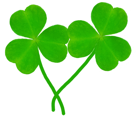 two leaves of shamrock