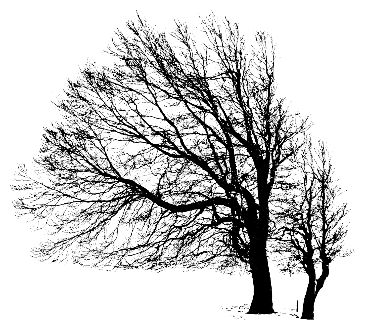 two wintertree silhouettes