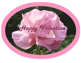 happy valentine pink rose