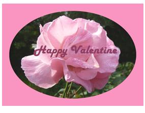 happy valentine pink rose