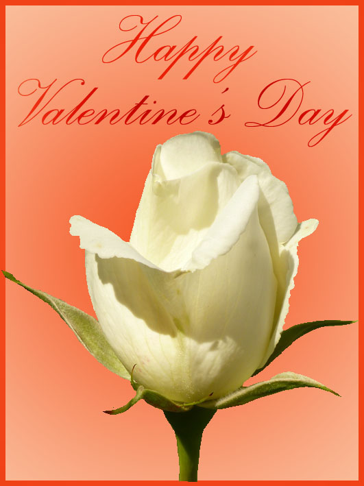 valentine greeting cards romantic white rose
