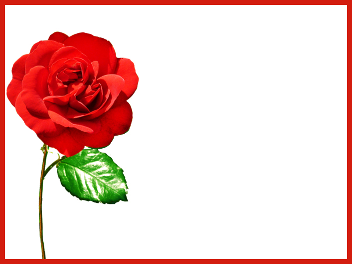 single red rose template Valentine