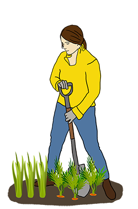 vegetable gardening clipart