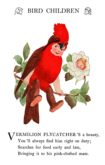 bird children Vermillion Flycatcher