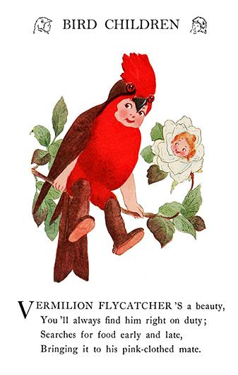 bird children Vermillion Flycatcher