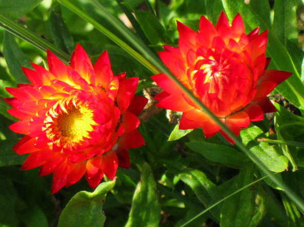Very orange flowers picture