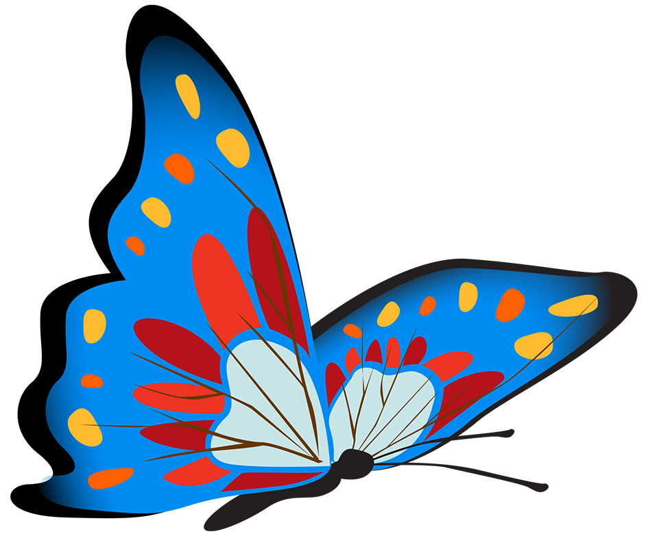 vibrant blue butterfly image