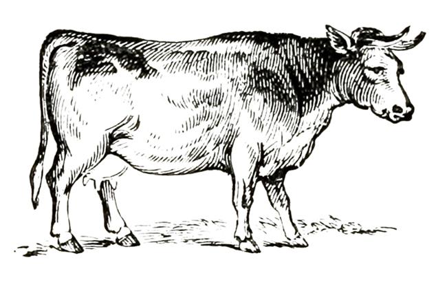 Victorian animal illustration