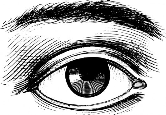 drawing of human eye