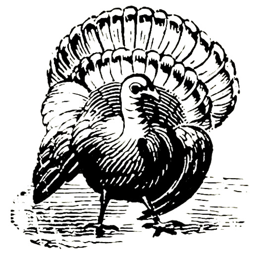 Victorian animal illustratino of turkey bird