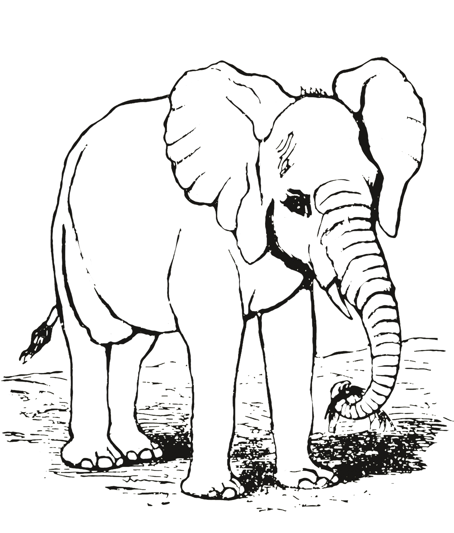 elephant drawing vintage for coloring