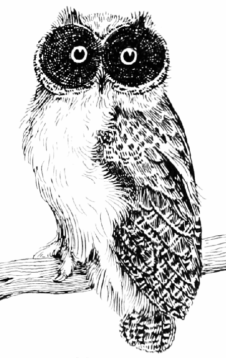 vintage owl drawing black white