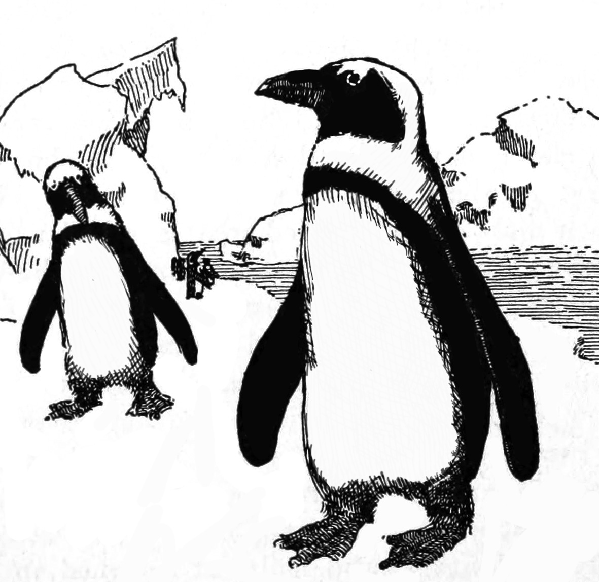 vintage penguin drawing