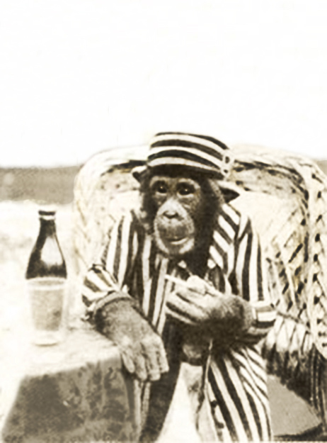 chimp dressed up photo