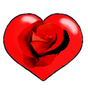 Red love heart for Valentine with red rose