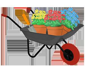 wheelbarrow with flowerpots