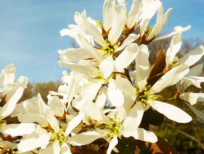 white flowers against blue sky
