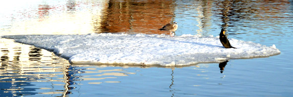 winter snow scenes birds on floe