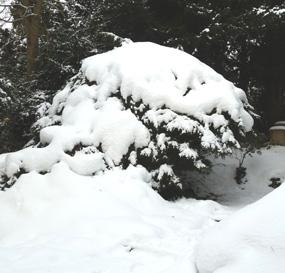 bush snow
