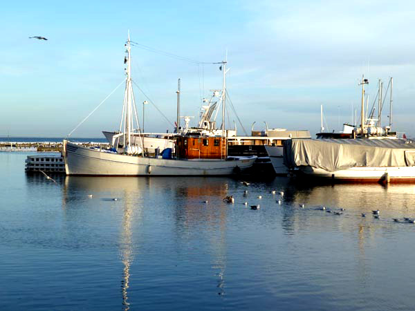 harbour in winter